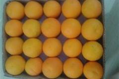 orannge (4)